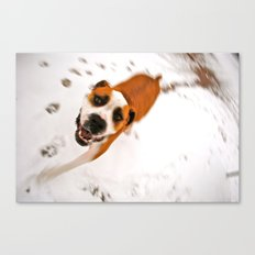 snow day for buster brown Canvas Print