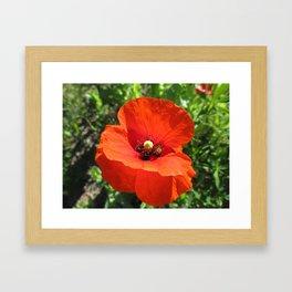 Poppy Power Framed Art Print