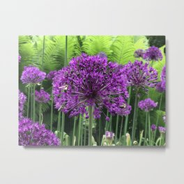 Bees on Allium Metal Print