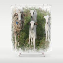 Ewe and Three Lambs Making Eye Contact Shower Curtain