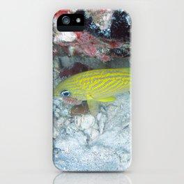 Watercolor Fish, French Grunt 04, St John, USVI iPhone Case