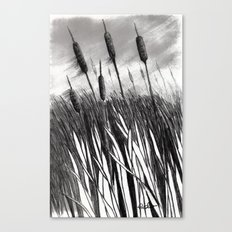 Cattail Field Canvas Print