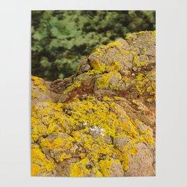 AYM - Australian Yellow Moss Poster