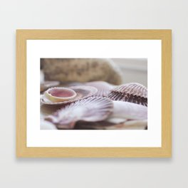 Fine Art Seashell Photograph wall art Framed Art Print