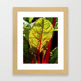 Colorful chard Framed Art Print