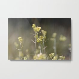 Closeup of Desert Milkweed Sunnyland Estates Metal Print