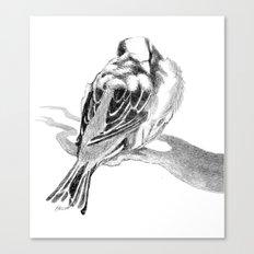 Cute Fluffy Bird Sleeping Canvas Print