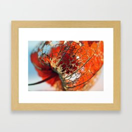 Physalis Framed Art Print