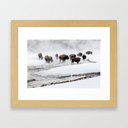 Yellowstone National Park - Bison Herd Framed Art Print