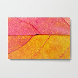 the leaf close up view - beautiful nature photo Metal Print