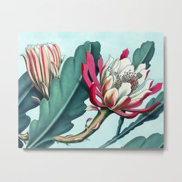 Flowering cactus III Metal Print