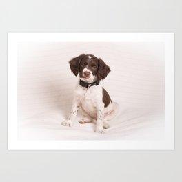 Brittany Puppy Sitting Art Print