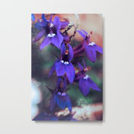 Violet Blue  Metal Print