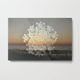Queens Anne's Lace 3 Metal Print
