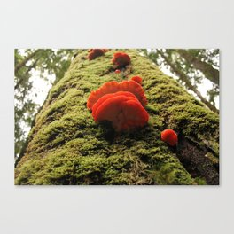 climb to the top Canvas Print