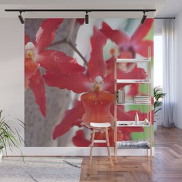 Exquisite Epidendrum Orchids Wall Mural