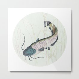 wels catfish Metal Print