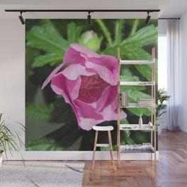 Musk Mallow - Pretty Pink Flower Wall Mural