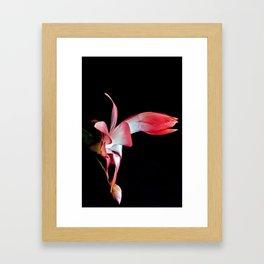 Red Christmas Cactus Framed Art Print