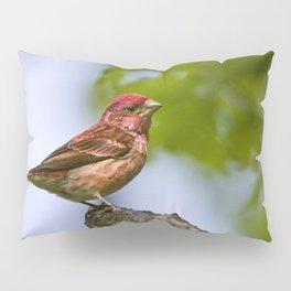 Purple Finch Pillow Sham