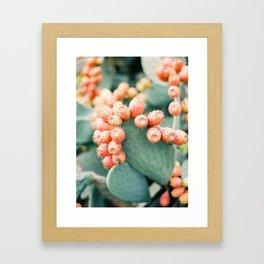 Opuntia - Ibiza - Nature photography Framed Art Print