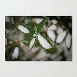 Green Star Canvas Print