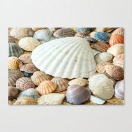 Sea Shells  -  Ocean, Sea, Nature Canvas Print