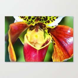 Bold Flower Art - Intimate Orchid 6 - Sharon Cummings Canvas Print
