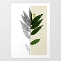 Smilacina Art Print