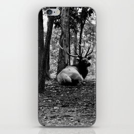 Elk Laying Down in Woods iPhone Skin