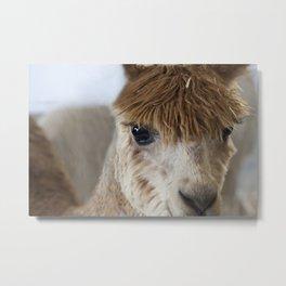 Little Brown Alpaca Metal Print
