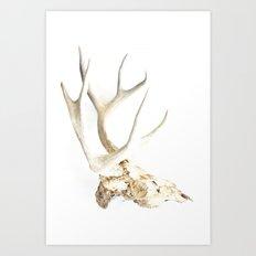 deer skull Art Print