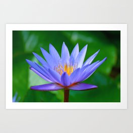 Violet lotus flower by #Bizzartino Art Print