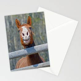 Horse Humour Stationery Cards
