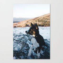 Dog by Will Swann Canvas Print