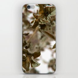 Basil iPhone Skin