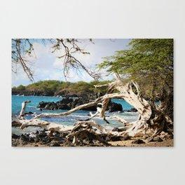 Scenic Shore Canvas Print