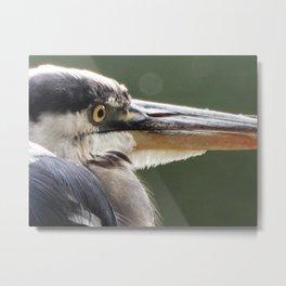 Heron close-up Metal Print