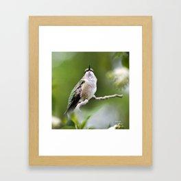 Elegant Hummingbird Framed Art Print