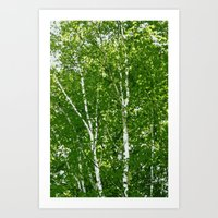 birch Art Prints featuring Birch Trees by Tru Images Photo Art