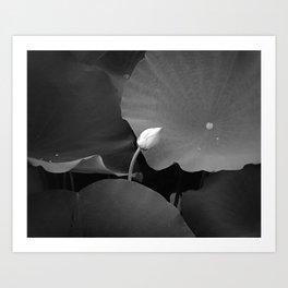 New Bloom Art Print