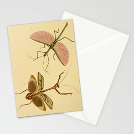 Naturalist Stick Bugs Stationery Cards