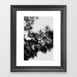 Pine Tree Black & White Framed Art Print