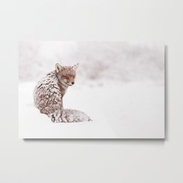 A Fox Fantasy (Red Fox in the snow)  Metal Print