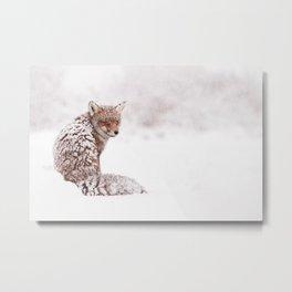 A Fox Fantasy (Red Fox in the snow)  Metal Print