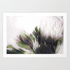 Pretty Protea Art Print