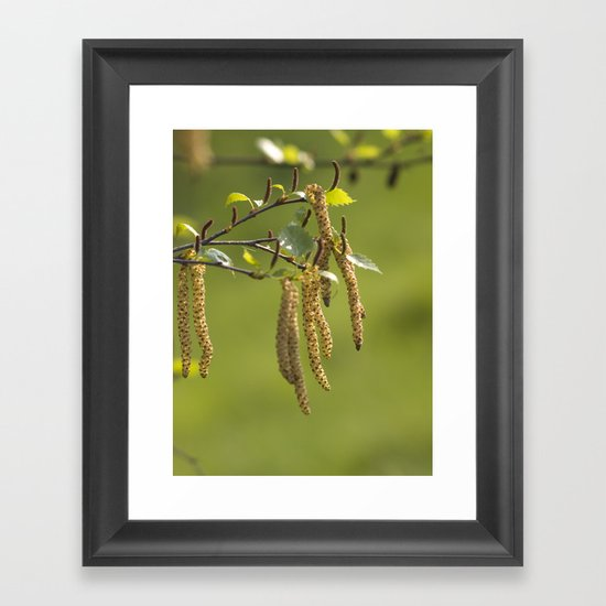 Catkins in the sunlight Framed Art Print