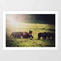 Horse Kiss  Art Print