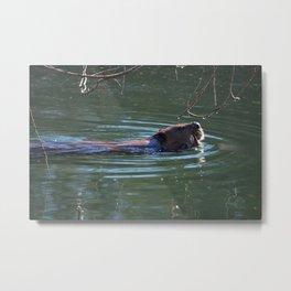 Eager Beaver Metal Print