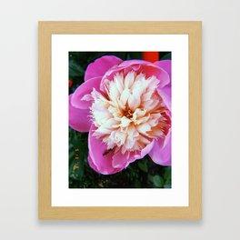 Bowl of Beauty Peony Framed Art Print